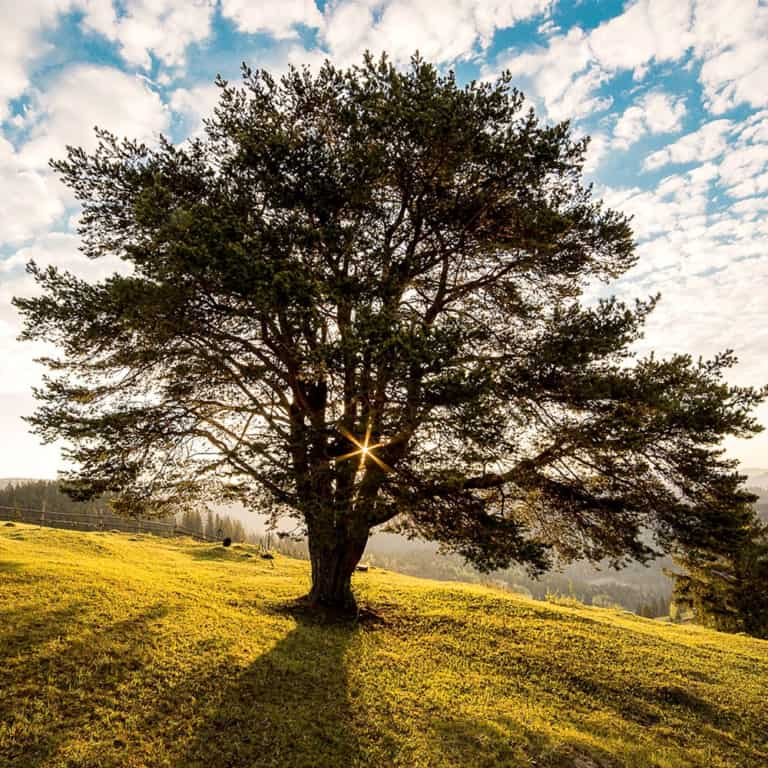 Apical Arbor Brackley