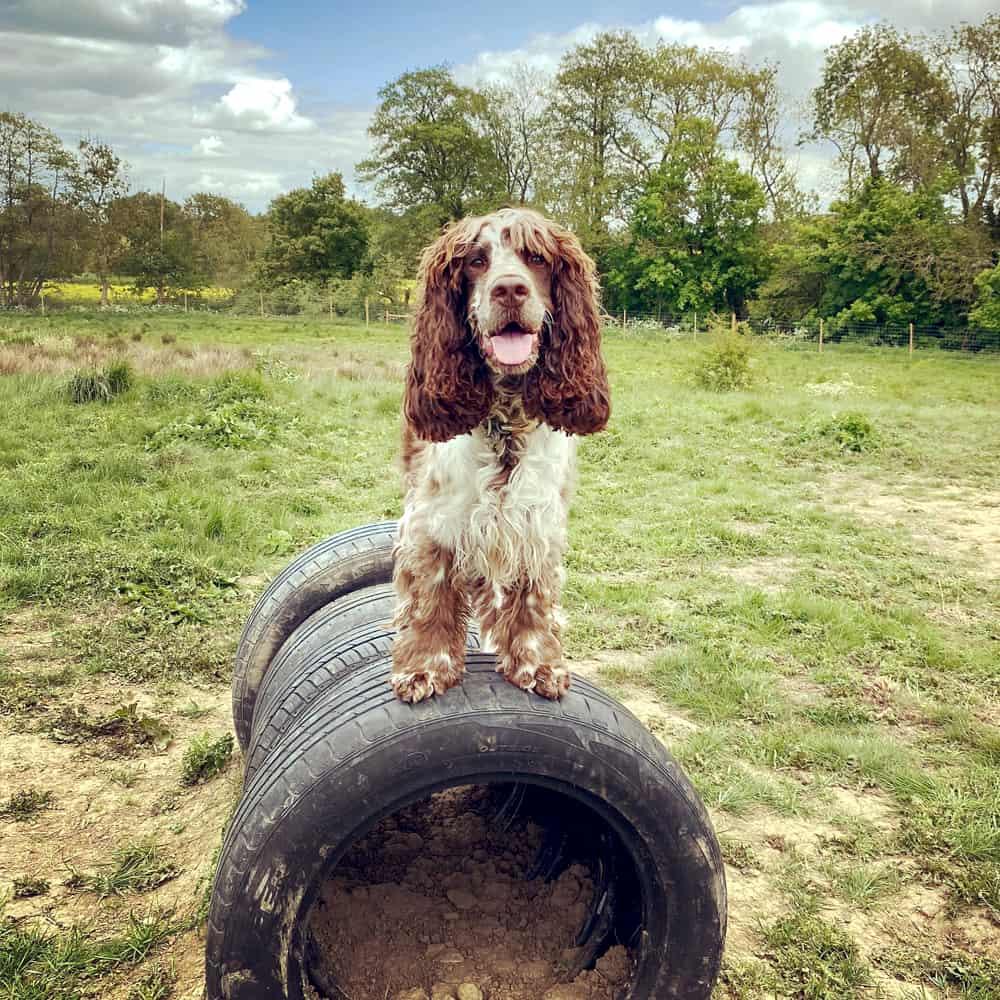 Dog Trainer Brackley
