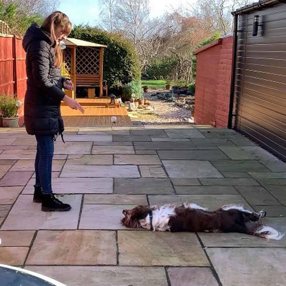 Dog Trainer In Brackley