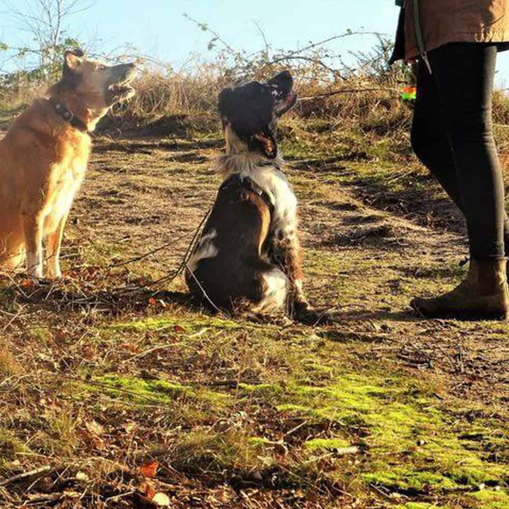 Dog Training In Brackley