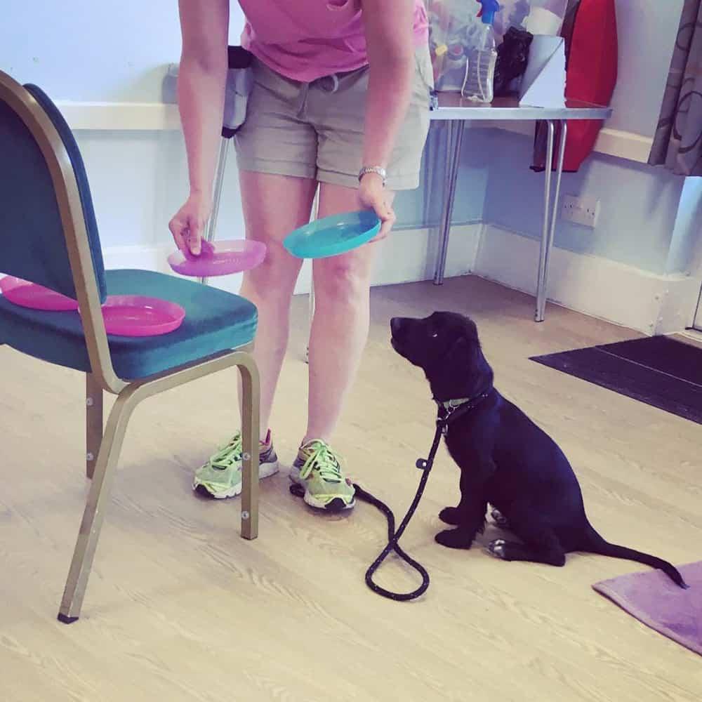 Puppy Trainer In Brackley