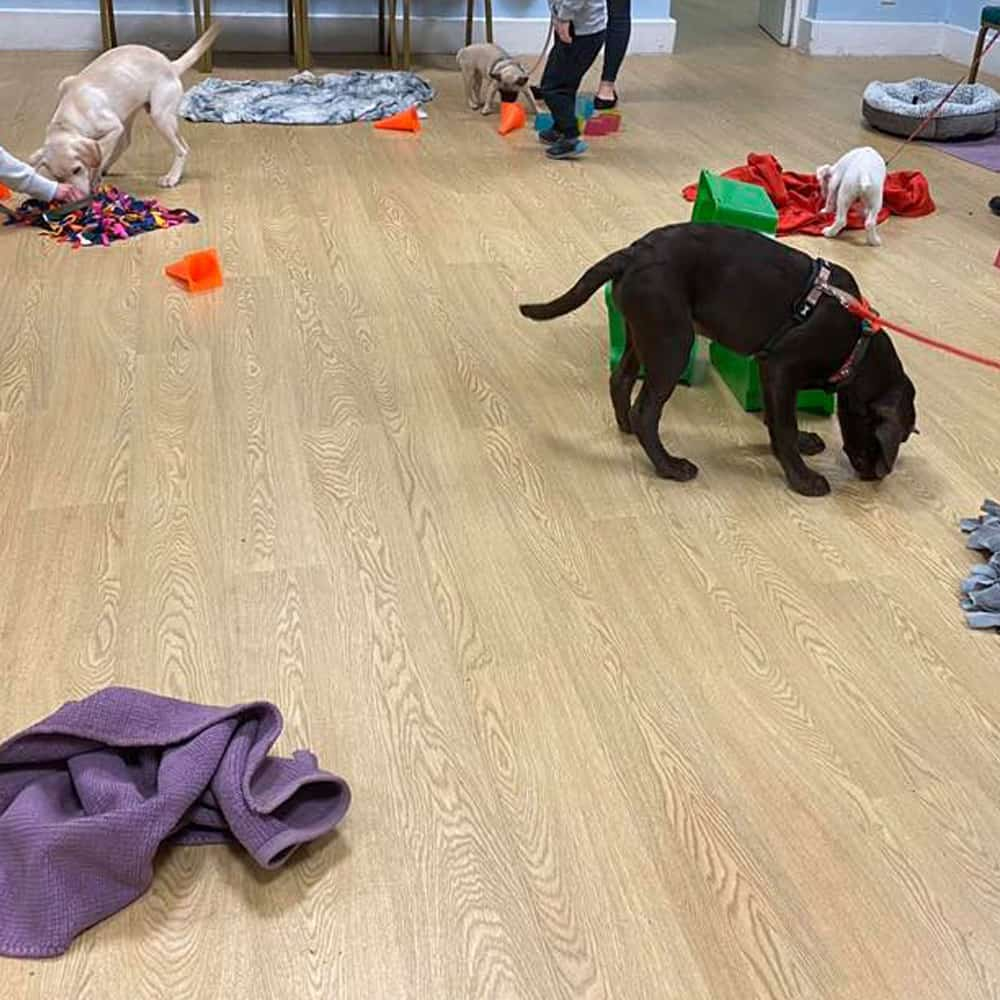 Puppy Trainers In Brackley
