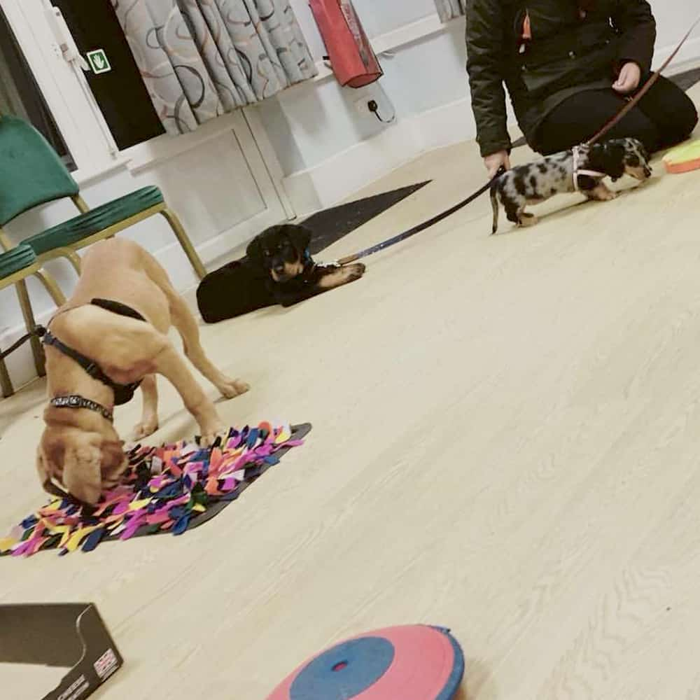 Puppy Training In Brackley