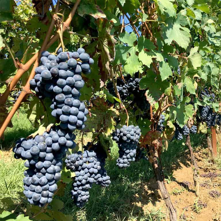 Trelawny Wine Brackley