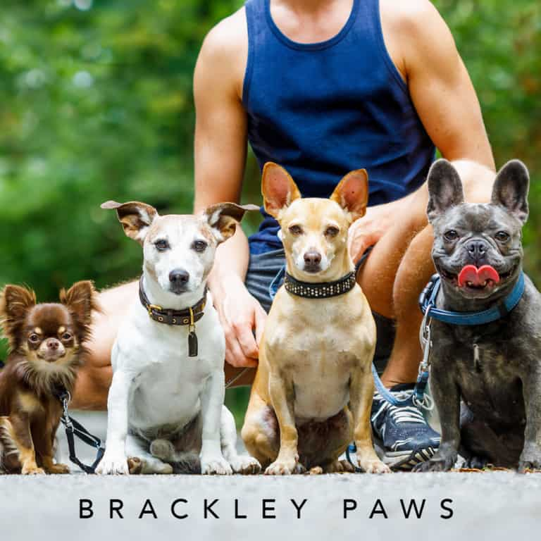 Brackley Paws Dog Walking