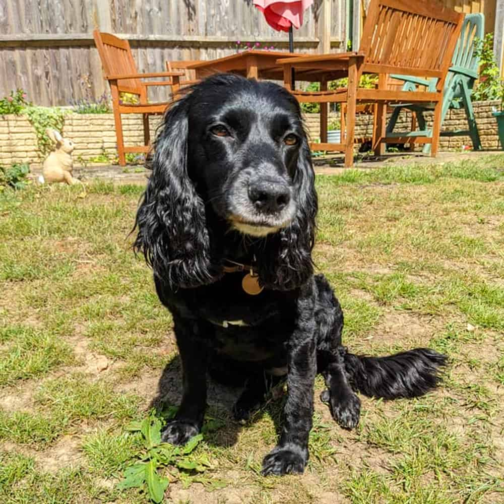 Dog Training Brackley