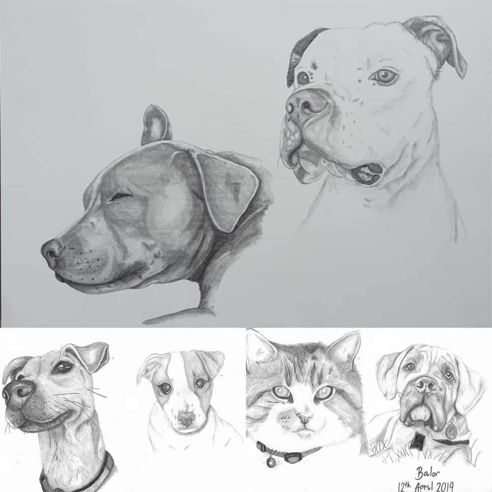 Pet Portraits Brackley