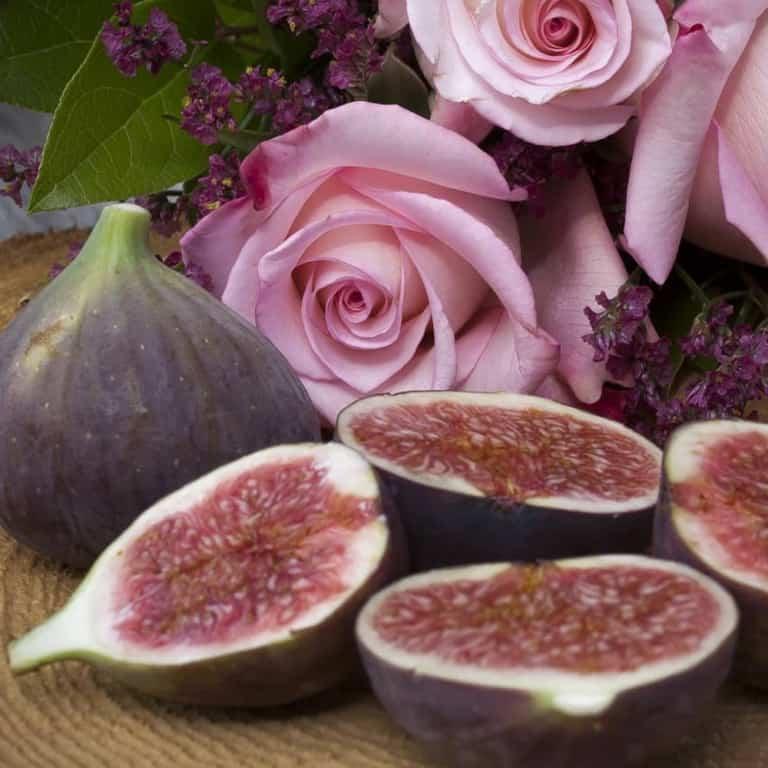 Purple Fig Garden Design Brackley