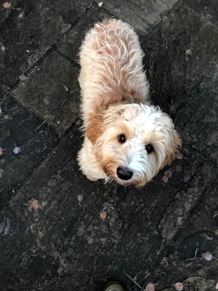 Brackley Dog Accommodation