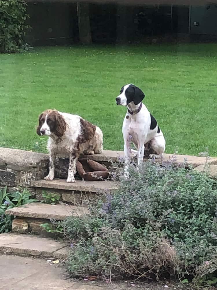 Dog Accommodation For Brackley