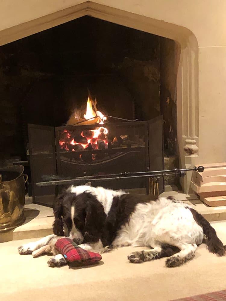 Dog Accommodation In Brackley
